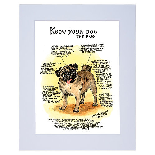 Pug - A4 Mounted Print - Know Your Dog - Pack of 6