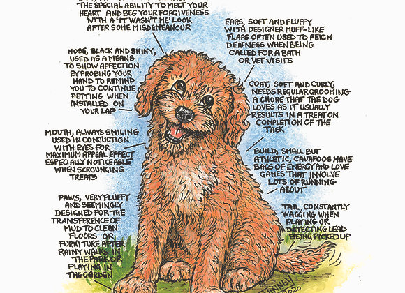 Cavapoo - Greetings Card - Know Your Dog - Pack of 6