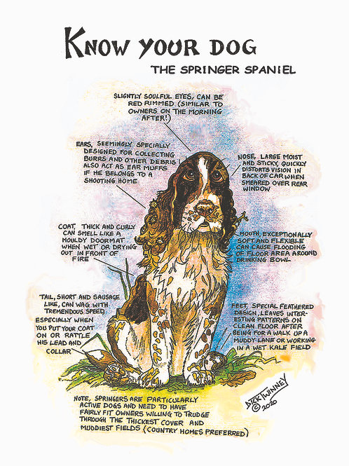 Springer Spaniel - Greetings Card - Know Your Dog - Pack of 6