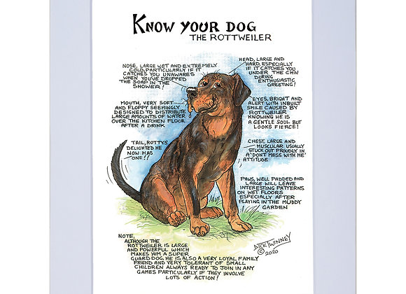 Rottweiler - A4 Mounted Print - Know Your Dog - Pack of 6
