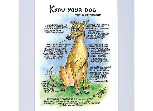 Greyhound - A4 Mounted Print - Know Your Dog - Pack of 6