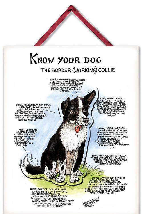 Border Collie - 3D Wall Plaque - Know Your Dog - Pack of 6