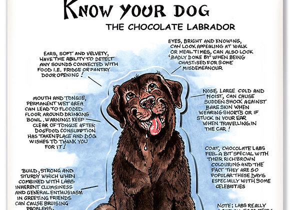 Chocolate Labrador - 3D Wall Plaque - Know Your Dog - Pack of 6