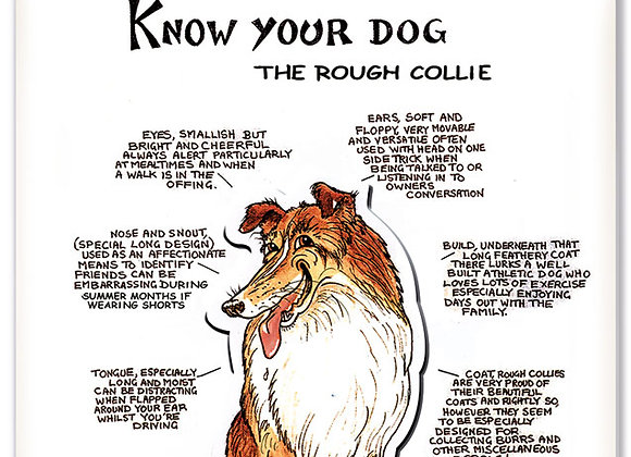 Rough Collie - 3D Wall Plaque - Know Your Dog - Pack of 6