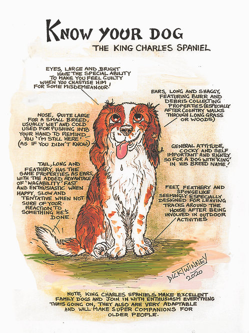 Kings Charles Spaniel - Wall Plaque - Know Your Dog - Pack of 6