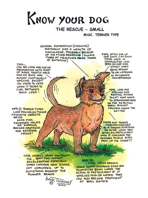 Rescue Dog Small - Greetings Card - Know Your Dog - Pack of 6