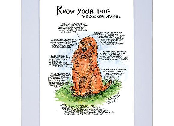 Cocker Spaniel - A4 Mounted Print - Know Your Dog - Pack of 6
