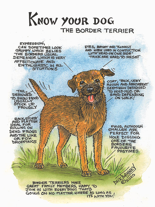 Border Terrier - Wall Plaque - Know Your Dog - Pack of 6