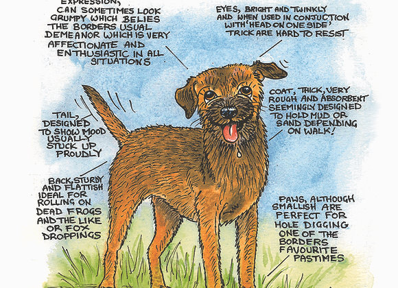 Border Terrier - Greetings Card - Know Your Dog - Pack of 6
