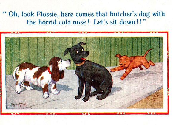 Cold Nose - Donald McGill - Postcards Pack of 48