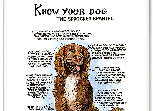 Sprocker Spaniel - 3D Wall Plaque - Know Your Dog - Pack of 6