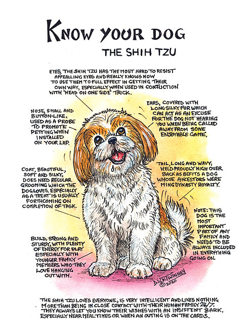 Shih Tzu - Greetings Card - Know Your Dog - Pack of 6