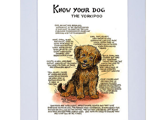 Yorkipoo - A4 Mounted Print - Know Your Dog - Pack of 6