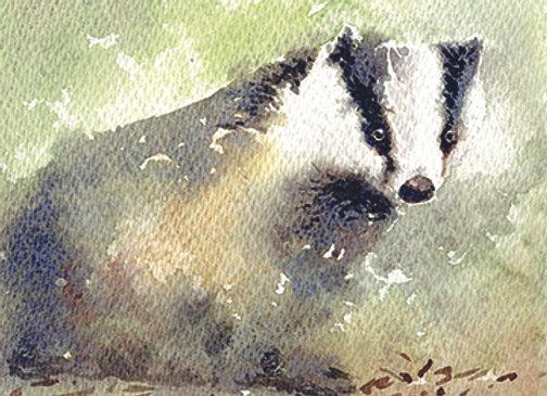 004620 Badger