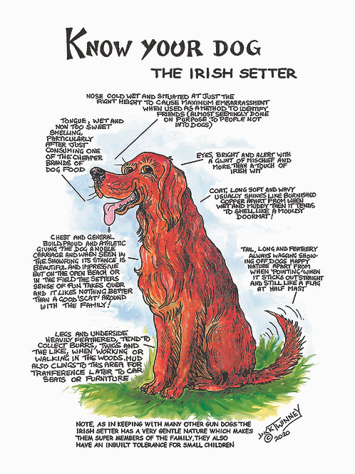 Irish Setter - Wall Plaque - Know Your Dog - Pack of 6