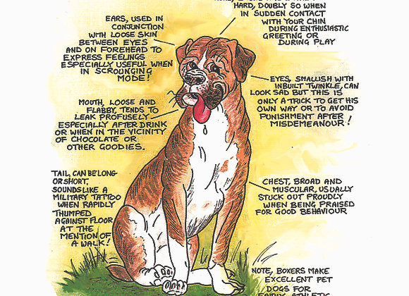 Boxer - Greetings Card - Know Your Dog - Pack of 6