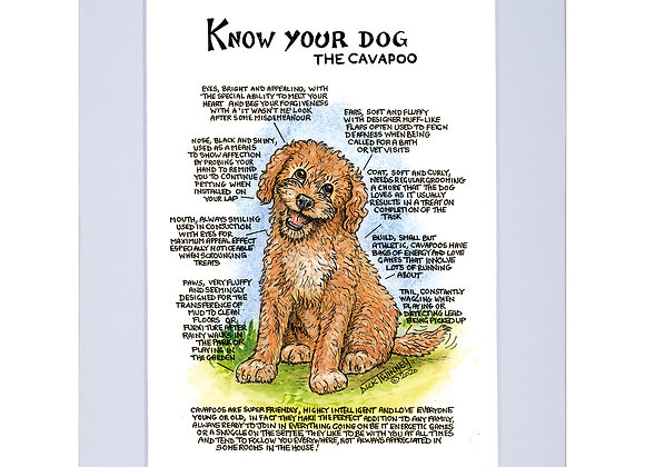 Cavapoo - A4 Mounted Print - Know Your Dog - Pack of 6