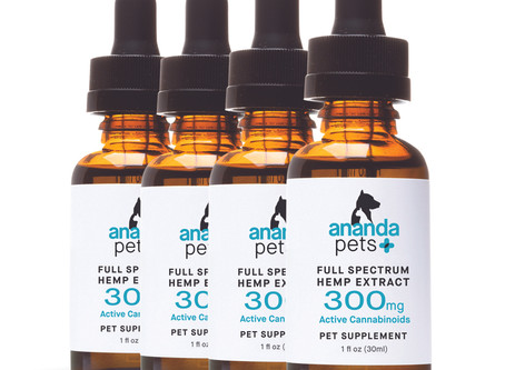 Using CBD To Help Your Furry Friend