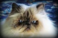 LDN Science for Animals - Naltrexone Use in Veterinary Medicine