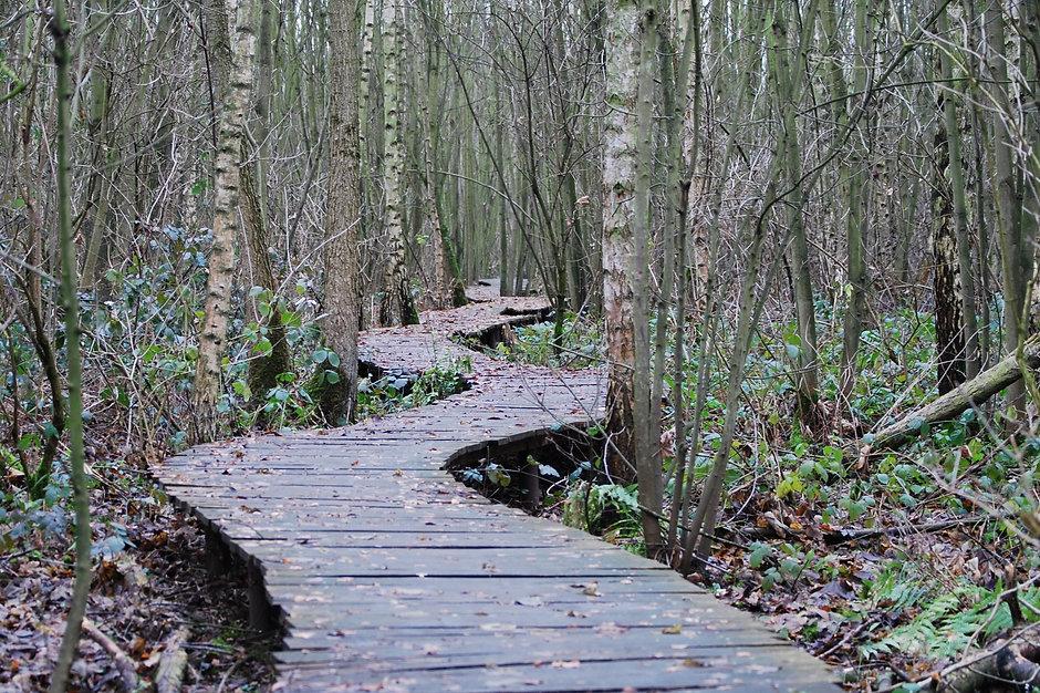 tree-nature-forest-path-wilderness-winter-1113359-pxhere.com.jpg
