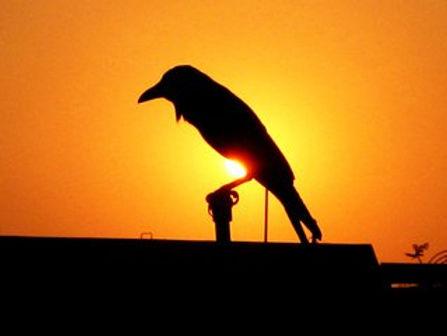 crow-1376188.jpg