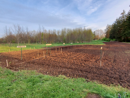 Gardening Plots Available With FYI