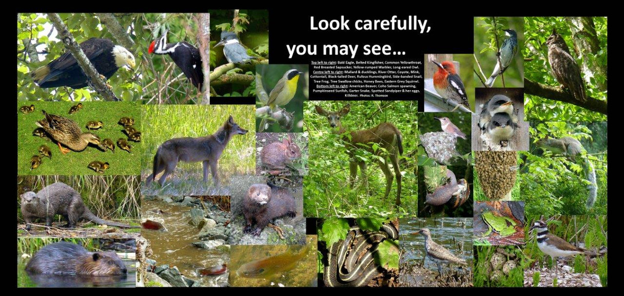 Watch for Wildlife mc.jpg
