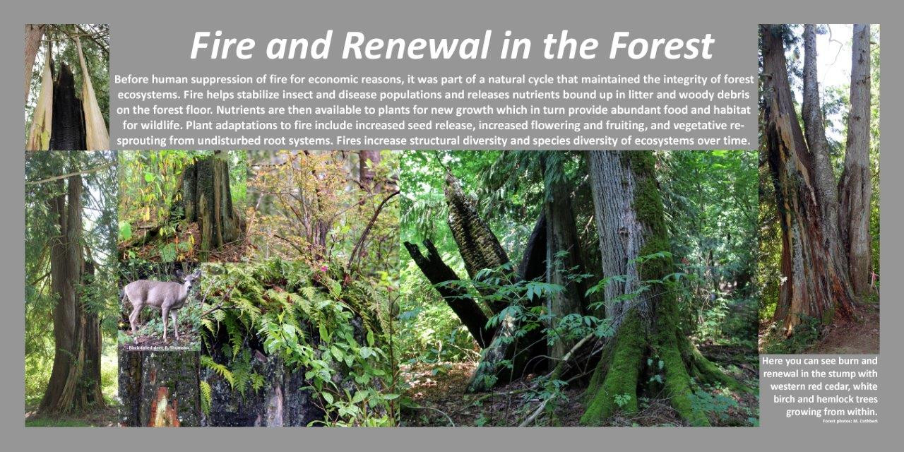 Fire & Renewal inthe forest mc.jpg