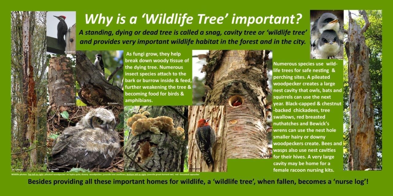 Wildlife Tree 2018 mc.jpg