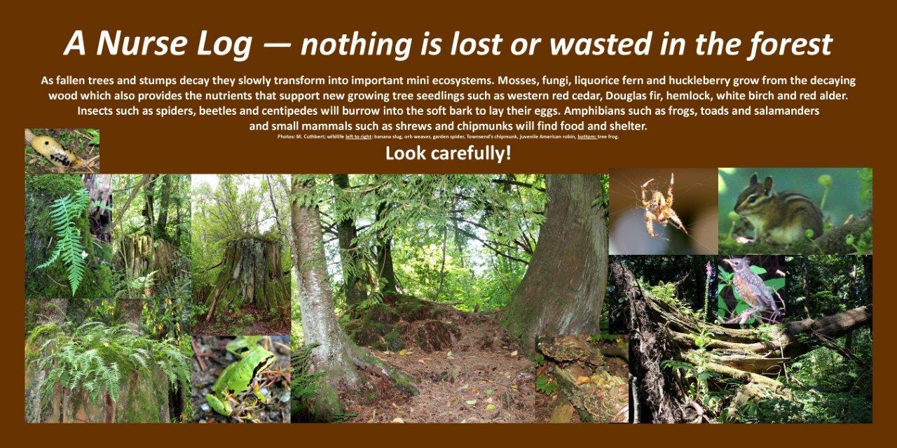 Nurse log, forest lifecycle mc.jpg