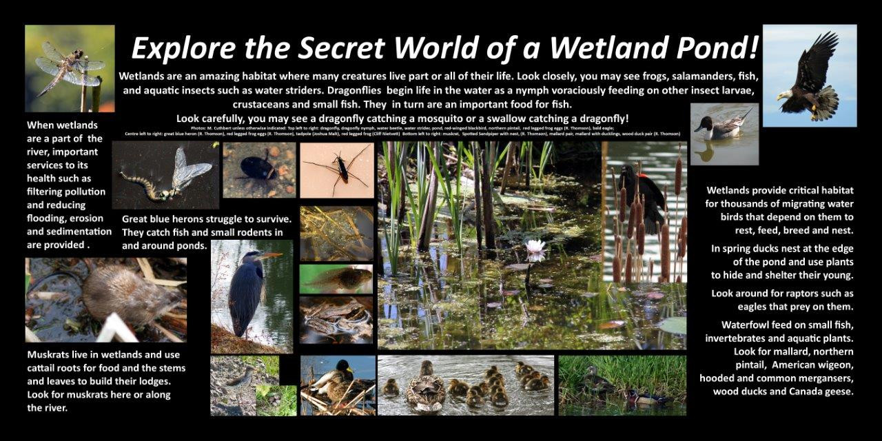 Pond Wetland 2018.jpg