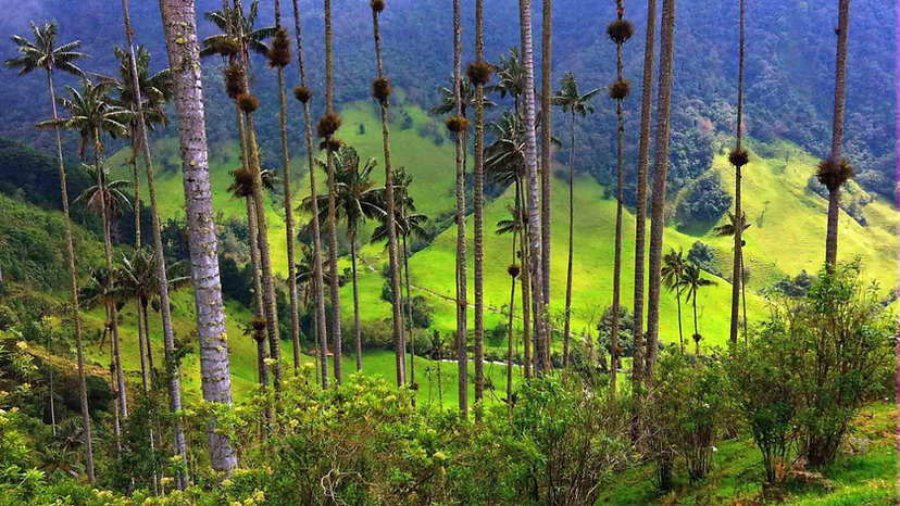 Colombia-valle-Cocora.jpg
