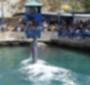 acuario-960x1149.jpeg