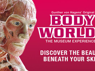 Body Worlds the Exhibition
