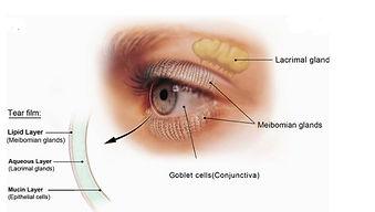 Dr Eye Capture.JPG