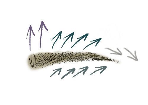 眉毛の整え方のイラスト