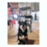 Thank you ♡____matcha_inu __cookie_lecot