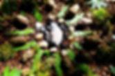Naturmandala.JPG