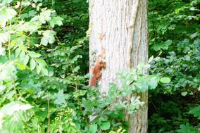 06.08 - Wald- und Wiesenabenteuer - Eichhörnchen