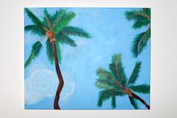 Patrick's Palm Trees