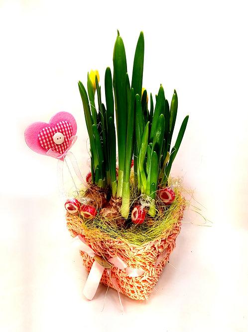Narcises podiņā dekorētas