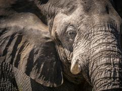Wildlife - Elefants