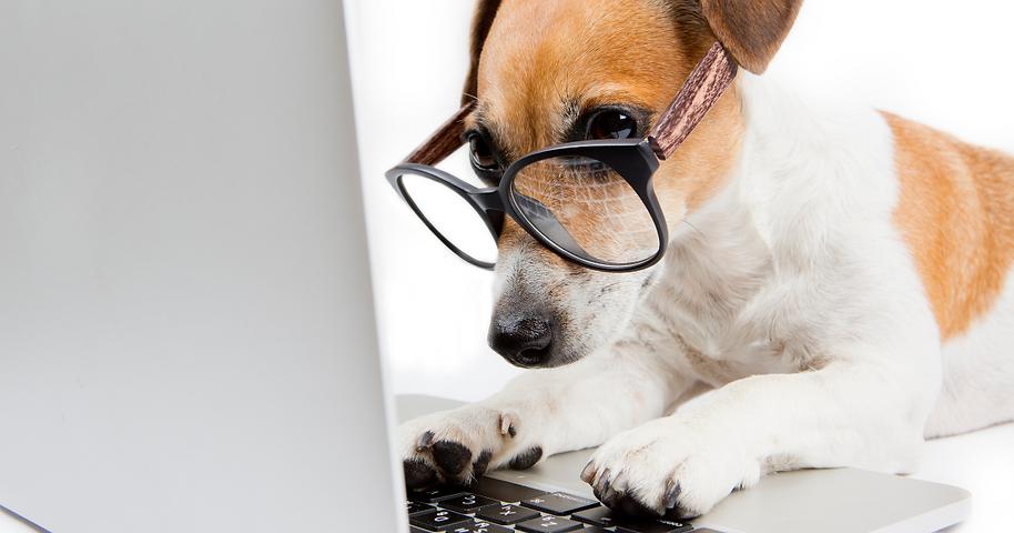 Dog Virtual training.png