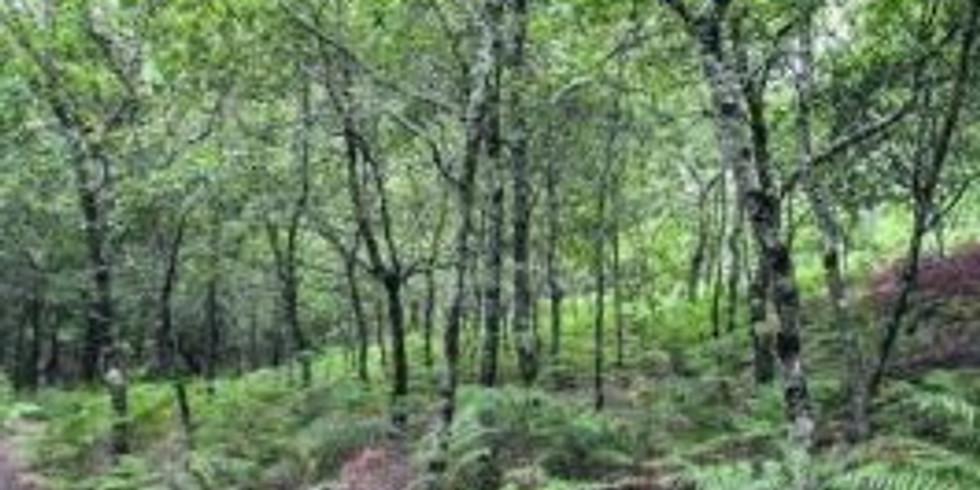 29/11: CABALOS SALVAXES TANDA 1: Ruta das Pedras (Redondela)
