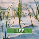 SOCIAL-PROFILE---life-v3.jpg