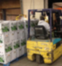 forklift loading produce in warehouse