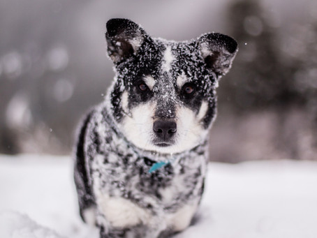 3 ways to stay safe when walking your dog in the winter