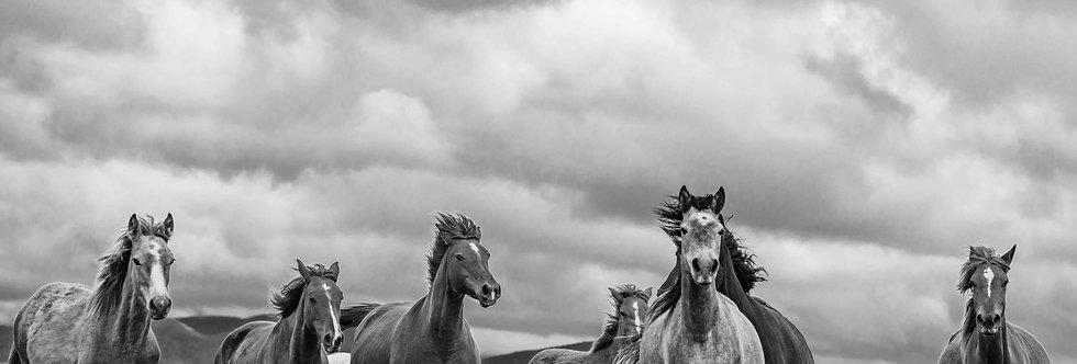 wildhorses #07