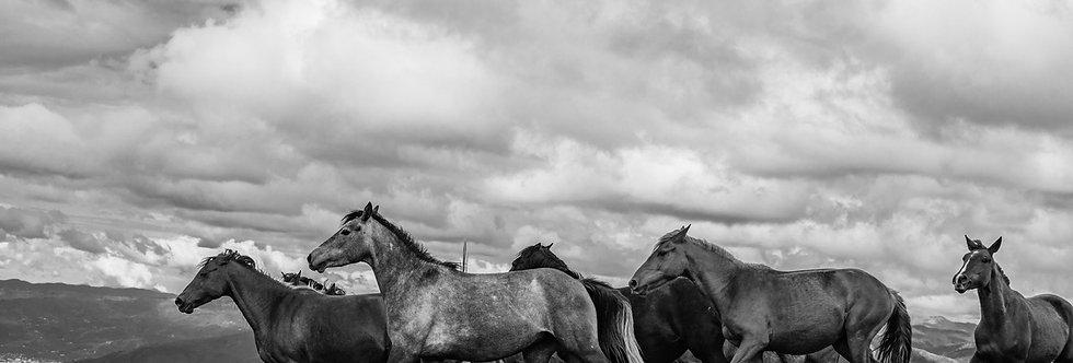 wildhorses #05