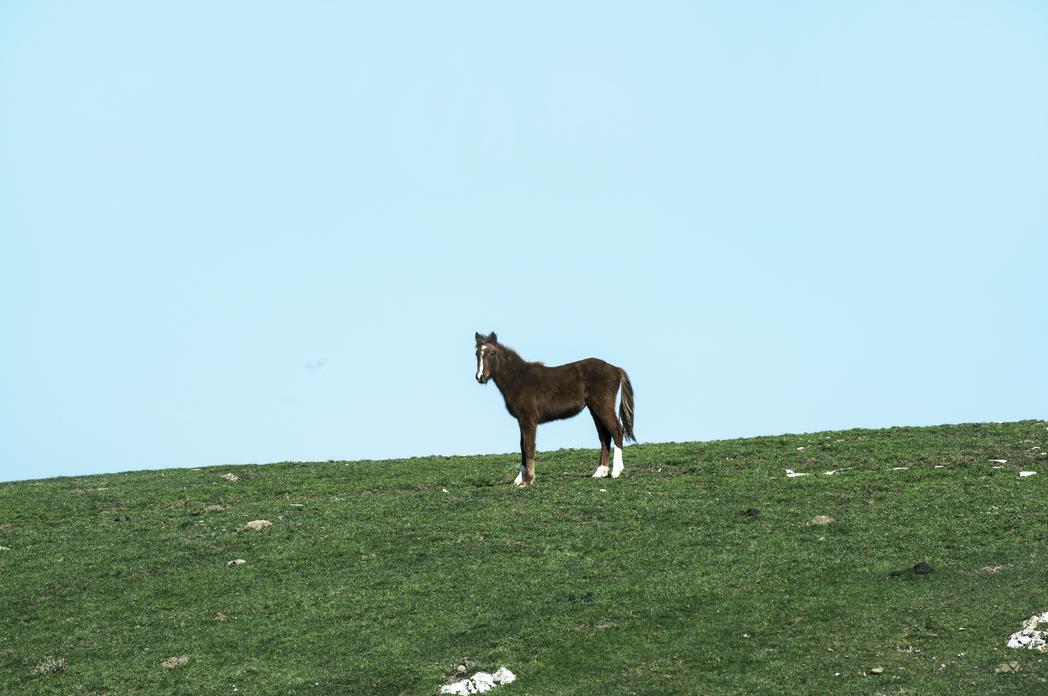 wild horse on Monte Calvana